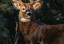 Safari photo of deer